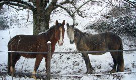 Les chevaux d'Albert, St-Michel-de-St-Geoirs
