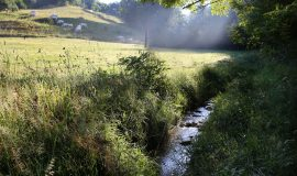 Ruisseau de Combe Moirans, St-Michel-de-St-Geoirs