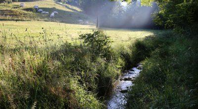 Ruisseau de Combe Moirans