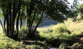 Saint-Michel-de-Saint-Geoirs - Le ruisseau des Blaches