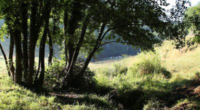 Le ruisseau des Blaches