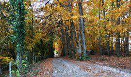 Chemin de Brosse-Ronde