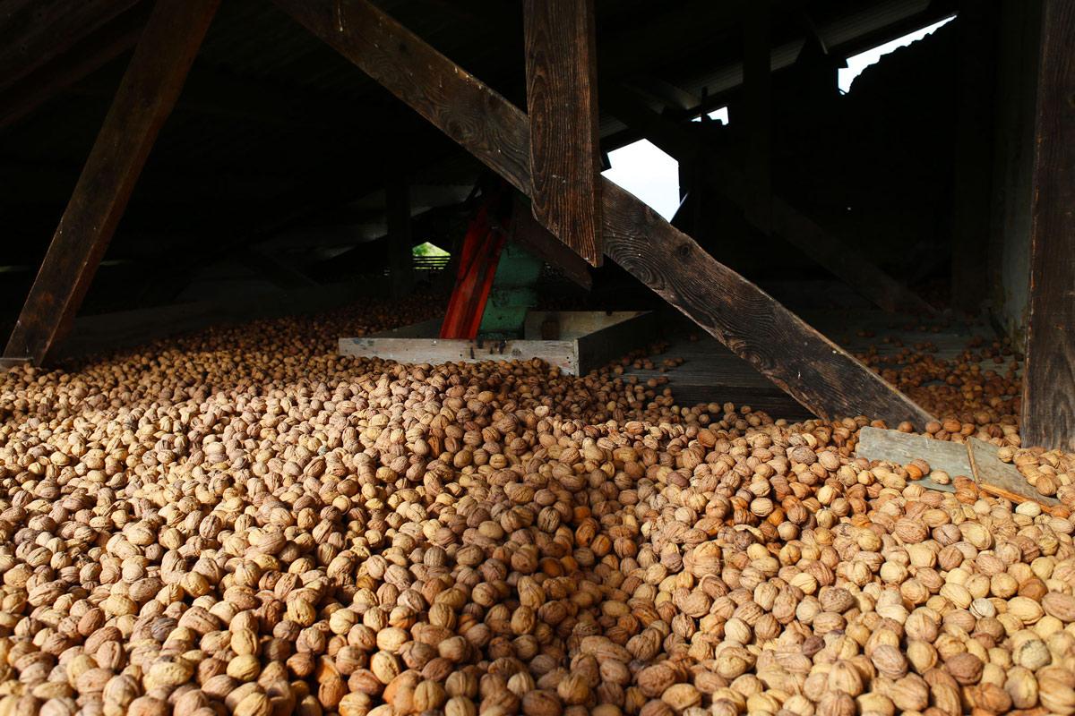 Séchage des noix
